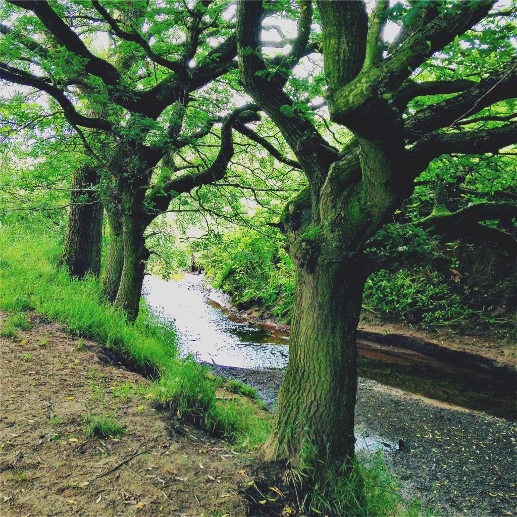 Trees and Brook 1