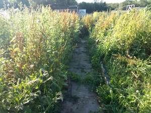 overgrown allotment